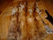 Мех натуральный: лиса рыжая выделанная