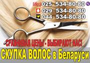 Скупка волос в Минске. Покупаем волосы дорого.